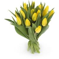 bunga tulip impor belanda